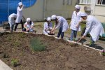 Экологическая акция «Дерево жизни»